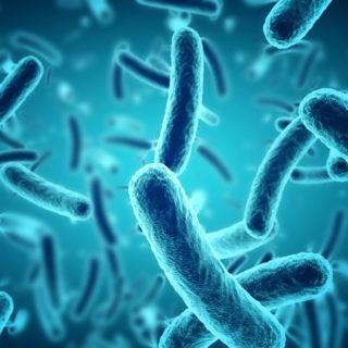 Disneyland Legionnaires Disease Outbreak